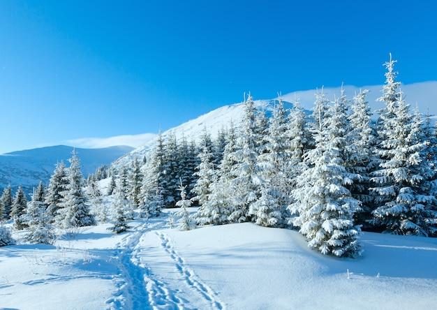 Утренний зимний горный пейзаж с елями на склоне карпатского, украина.
