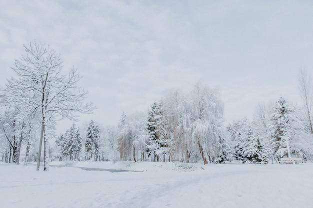 Утренний зимний пейзаж парка