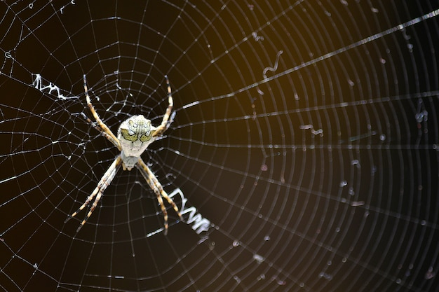 Mortal spider web nature pretty