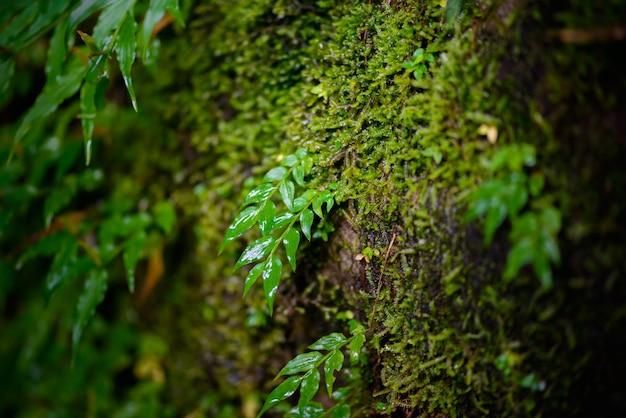 Mos in rainforest