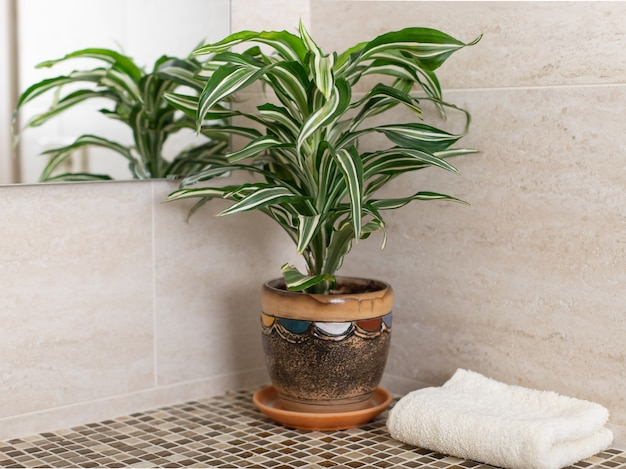 Mosaic bathroom counter with houseplant in flowerpot and clean towel. cleaning in the bathroom. horizontal image