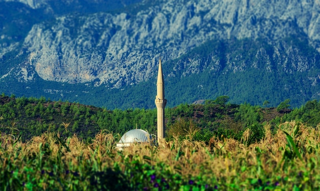 Mosque in a cornfield on a background of mountains. turkey, kirish.