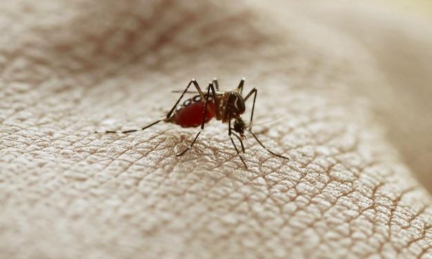 Mosquito biting arm.