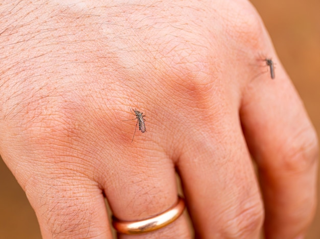 Mosquito on the hand piercing the skin and drinking the blood