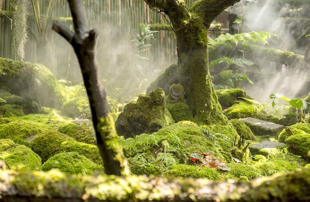 이끼와 양치류 스타일의 식물이 정원의 숲 바닥을 덮습니다.