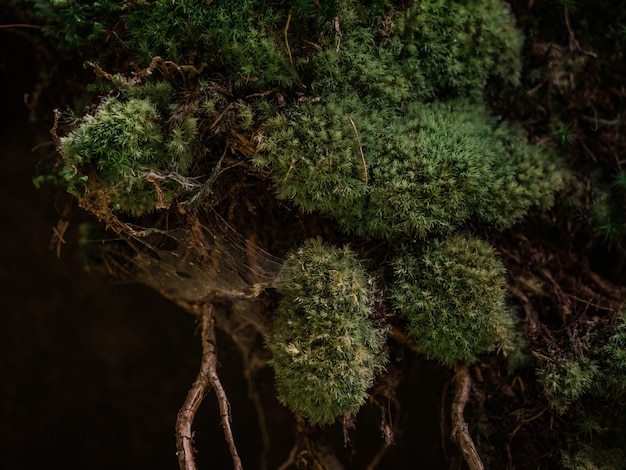 コケと蜘蛛の巣の背景ビュー1つ