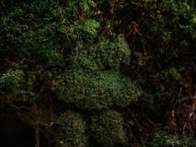 コケと蜘蛛の巣の背景ビュー2