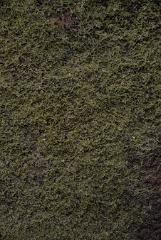 Moss background in nature