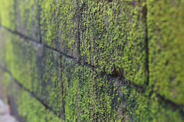 Moss by the wall focus in the middle