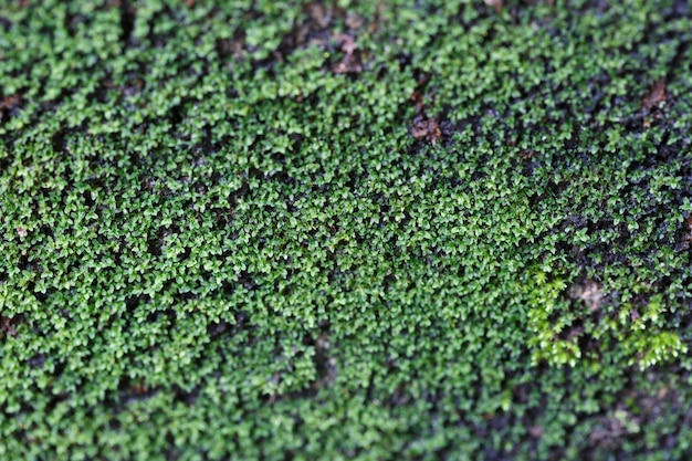 Moss by the wall