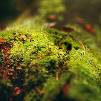 Moss close up view with little mushrooms