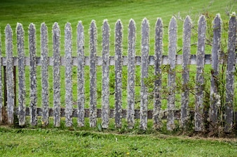 Moss covered picket fence in a green grassy lawn
