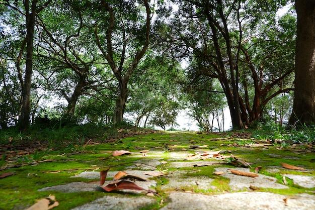 공원에서 이끼 덮인 돌 산책로.