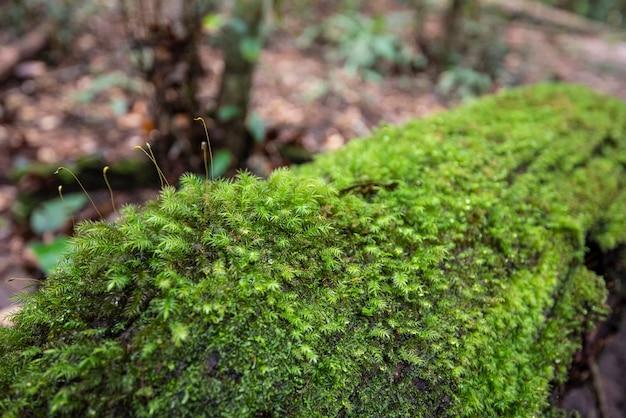 이끼와 열대 우림에서 모스 녹색과 고사리 세부 자연