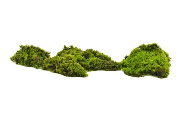 Зеленый мох на белом фоне Premium Фотографии
