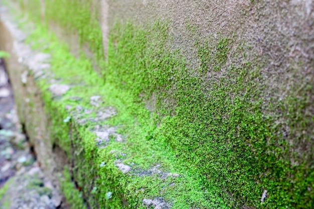 Moss green texture. moss background. green moss on grunge texture, background