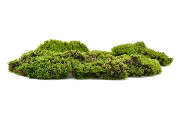 Moss green on white background