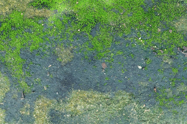 Moss grows on the cement floor.