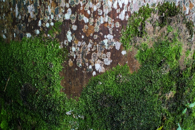 Moss grows on an old palm tree