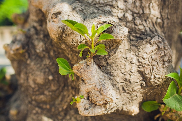 熱帯林における木の枝のコケの成長。