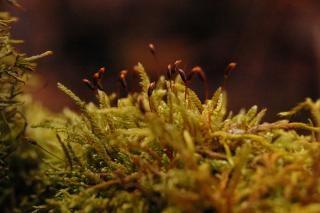 Moss, heads