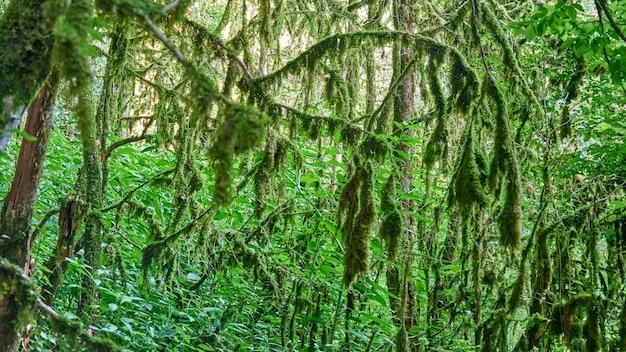 森のコケ。木の枝の日光。ソチ