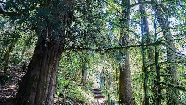 森のコケ。木の枝の日光