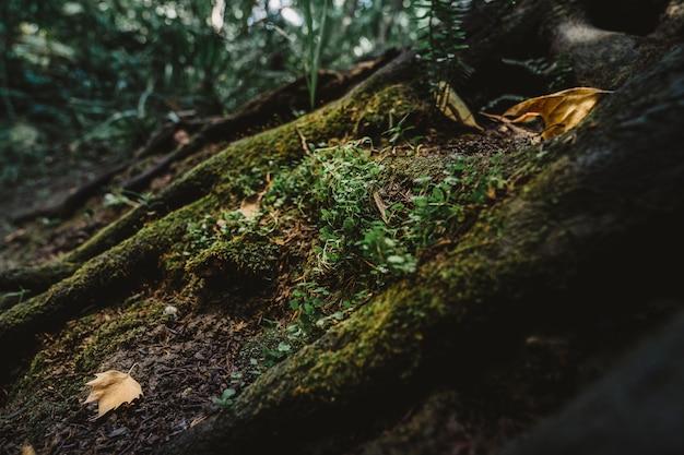 Мосс в лесу
