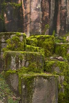 石の中の苔