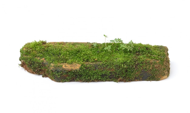Moss isolated on white space