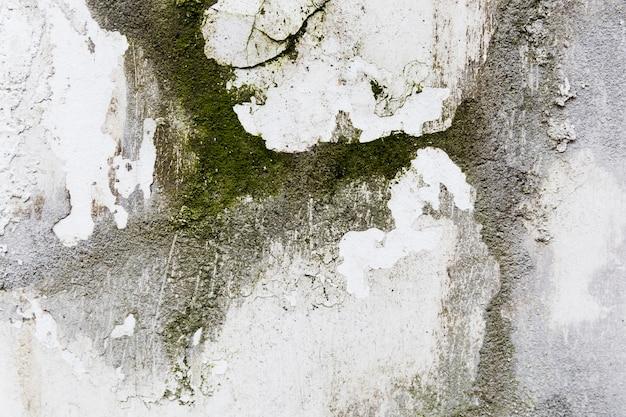荒いコンクリートの壁にコケします。