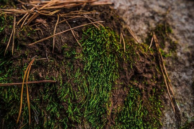 Мох на камнях в диком лесу