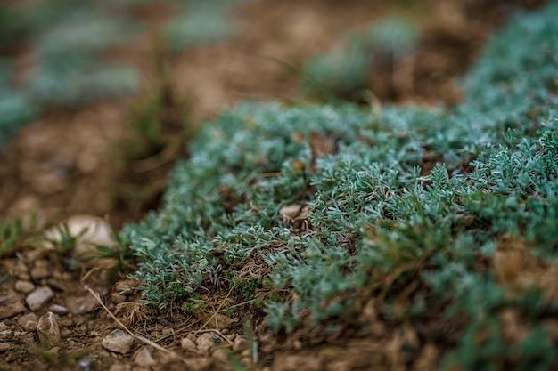 日没時の山頂の苔