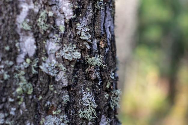 Мох на дереве. сбор грибов. прогулка по лесу.