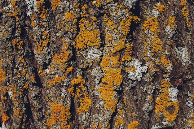 木の樹皮の背景にコケ。木の表面のクローズアップ苔テクスチャ。