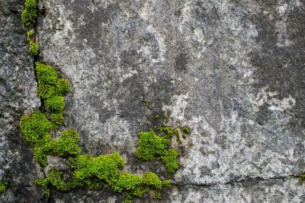 Moss on the rocks.
