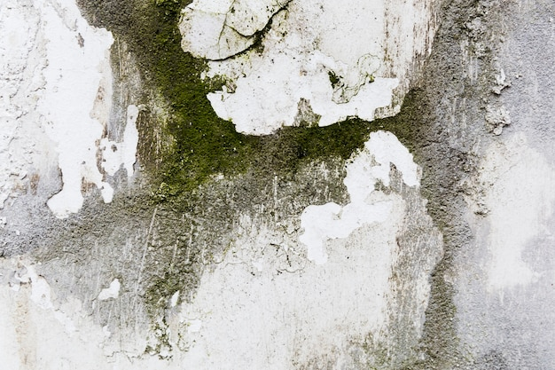 Moss on rough concrete wall