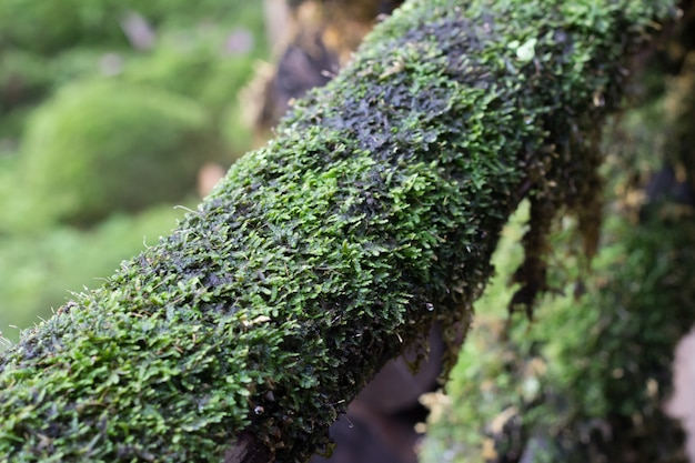 Moss on the timber