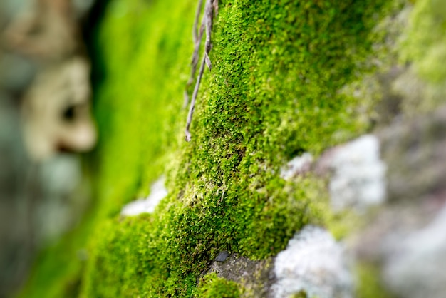 Moss on a tree background