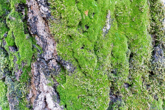 Moss on tree trunk