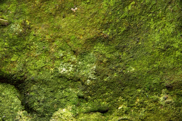 Moss wall background in nature