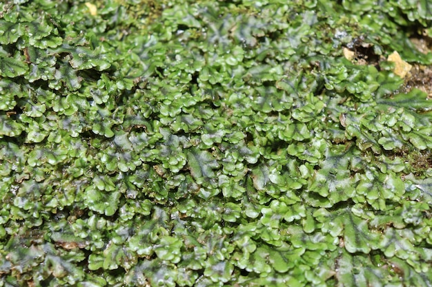 Moss on wet stone on a sunny day Premium Photo