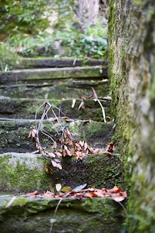 Mossy old stairs in old european park
