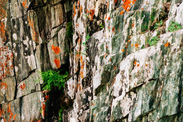 Mossy orange rocky layered surface of mountain with rich vegetations of highlands.