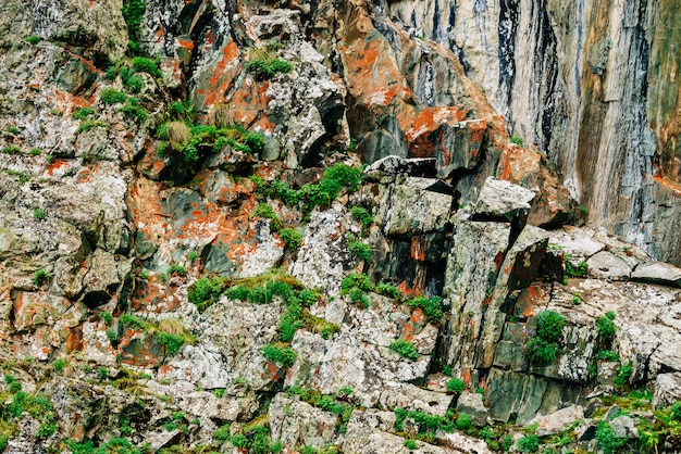 이끼가 자욱한 오렌지 바위 층 산의 풍부한 식물과 고지대의 식물. 절벽에 식물, 이끼 및 이끼. 복사 공간 산중의 자세한 질감입니다. 녹지와 질감 된 바위입니다.