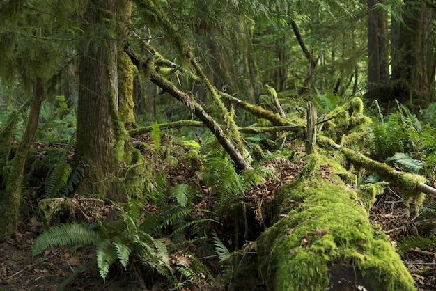 Mossy rainforest