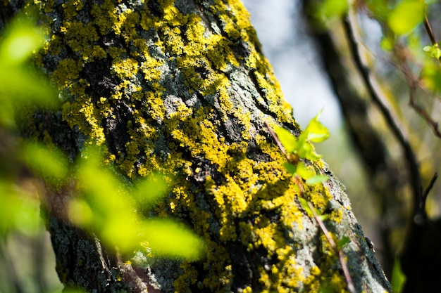 Mossy tree bark with sunlight