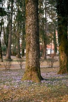 라일락 꽃과 푸른 잔디로 피는 야생화 중 공원에서 이끼 낀 나무