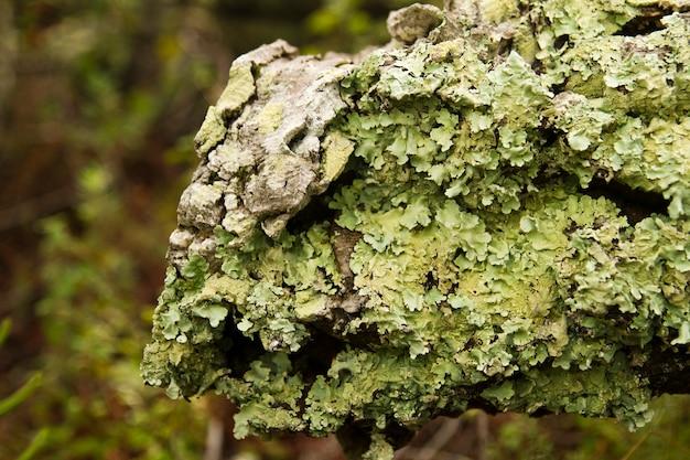 Mossy tree log