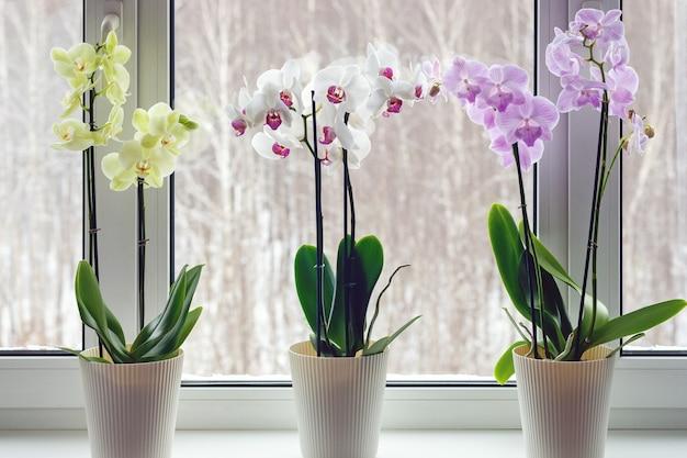 창턱에 나방 난초-살아있는 화분에 심은 꽃 식물이있는 가정 장식